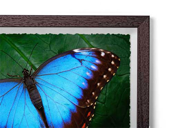 Charcoal - Box Classic Wood Frame