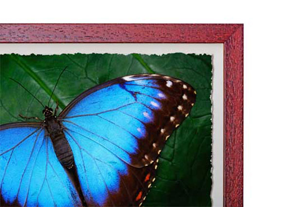 Cherry Box Frame