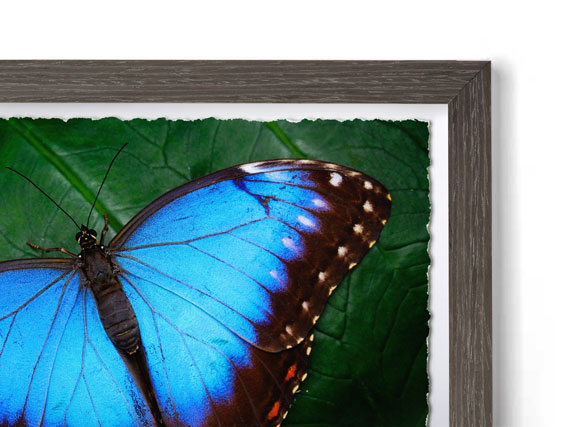 Natural Dusk - Box Modern Frame